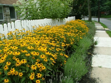 My Favorite Perennials For The Philadelphia Area Newtown Square Pa Robert J Kleinberg Landscape Design