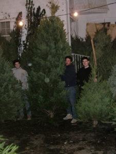 Christmas 03_trees.jpg (51869 bytes)