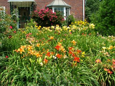 My favorite perennials for the philadelphia area newtown square pa flowering perennials mightylinksfo