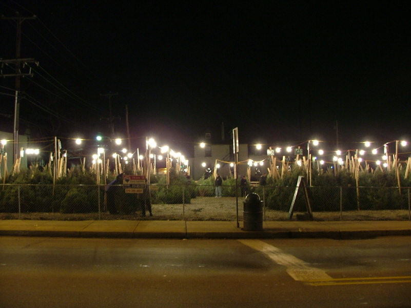 Christmas Tree Lot at night