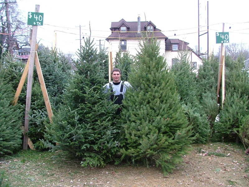 Selling Christmas Trees In Lansdowne PA For Over 40 Years