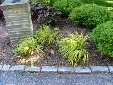 Low Growing Ornamental Grass My favorite perennials for the philadelphia area newtown square pa hakonachloa aureola low growing grass that can take some shade very nice workwithnaturefo