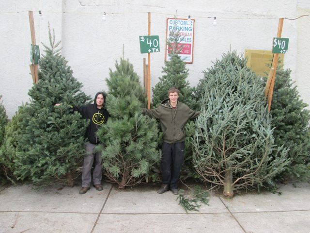 here is a couple of photos of some of the larger trees that we sometimes get about 10 days before christmas when our farmer is cleaning out his wholesale - Christmas Tree For Sale