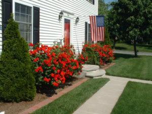 shrub roses 2.jpg (73708 bytes)
