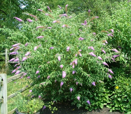 Deer Resistant Plants For The Philadelphia Area Trees